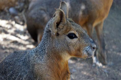 guide   wildlife  patagonia
