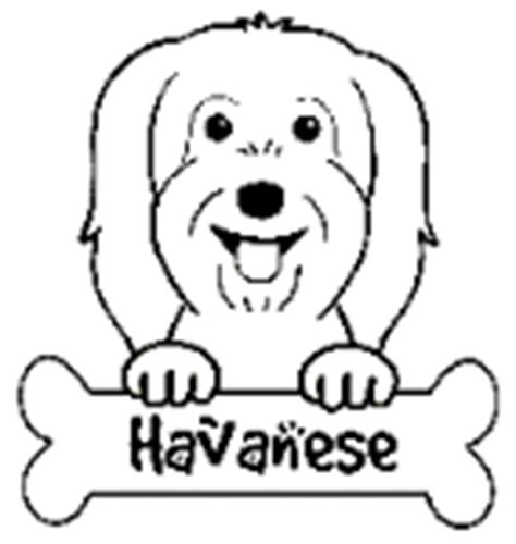 havanese dog coloring page dog coloring pages free
