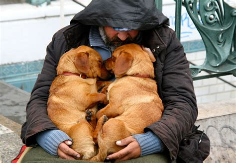 homeless puppies proof that dogs you no matter how much money you don t bored panda
