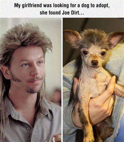 joes dogs 25 best ideas about joe dirt on joe dirt 2 joe dirt quotes and joe dirt dang