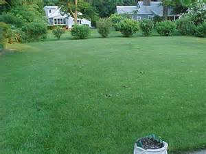 Meaning Of Backyard Yard Definition What Is