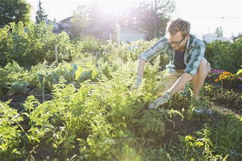 acidic soil gardening definition