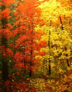 colors of autumn a painting for you