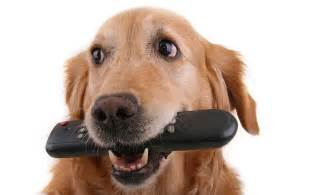 Dogs How To Stop Your Dog Stealing The Happy Puppy Site