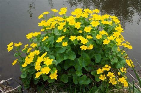 Pflanzen F R Teich 769 by Teich Bepflanzen Mehr Als 70 Ideen Archzine Net