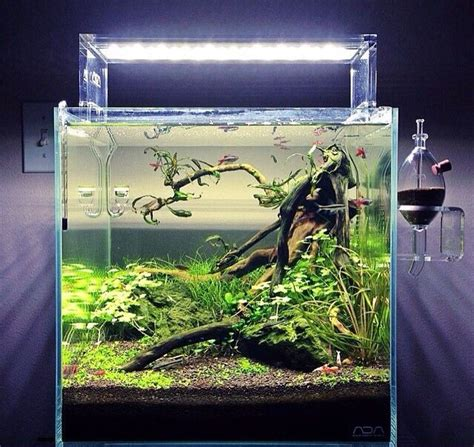 aquascape tank for sale 573 best aquariums aquascapes images on pinterest fish