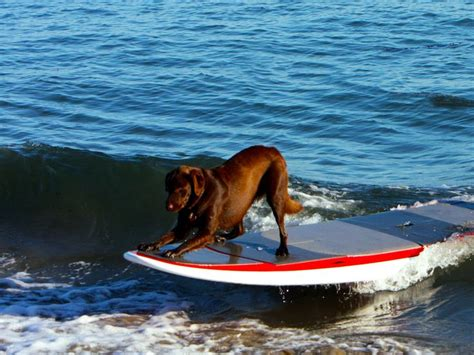 dog boat dolphin 30 best images about dogs on boats on pinterest