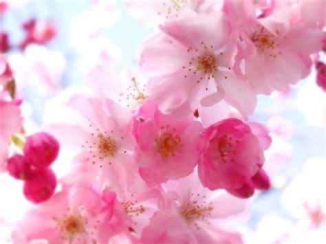 cute hd wallpaper of flowers cute floral wallpaper 215 cute flowers images wallpapers