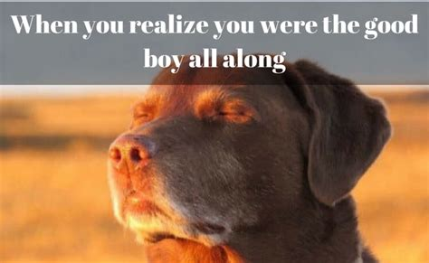 Internet Dog Meme - 100 dog memes that prove the internet is not all made out