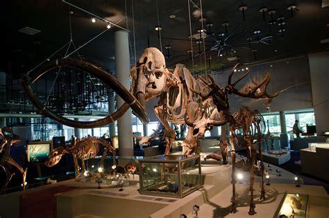 amsterdam museum of natural history naturalis biodiversity center wikipedia