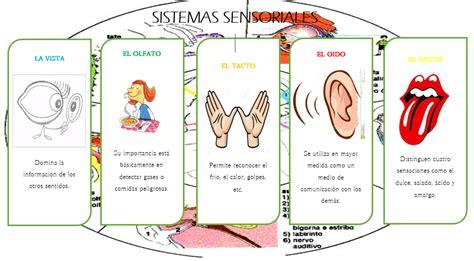 definicion de imagenes sensoriales tactiles actividad vii cuadro comparativo de los sistemas