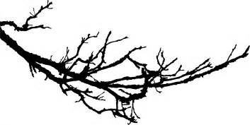 images tree branch