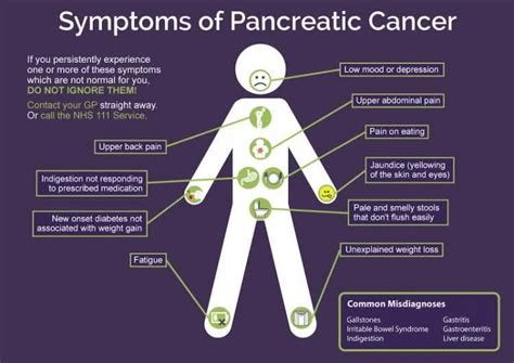 where is your pancreas located diagram where is pancreas located what are the symptoms of