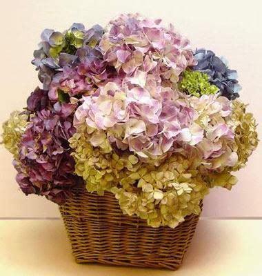seccare fiori come seccare le ortensie 5 passi