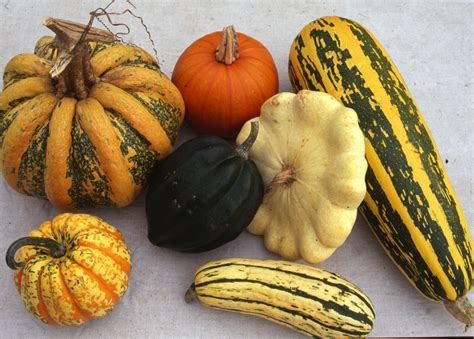 winter squashes sea spring seeds