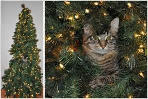 Cats on christmas trees 19 pics curious funny photos pictures