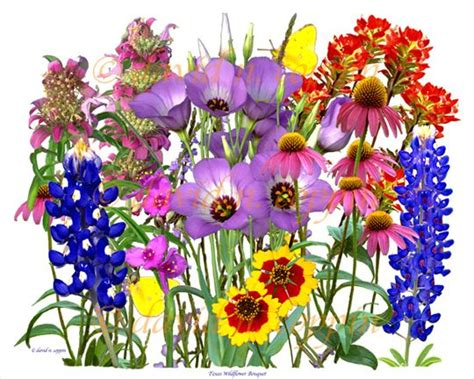 wildflowers pictures texas wildflower bouquet  artistic