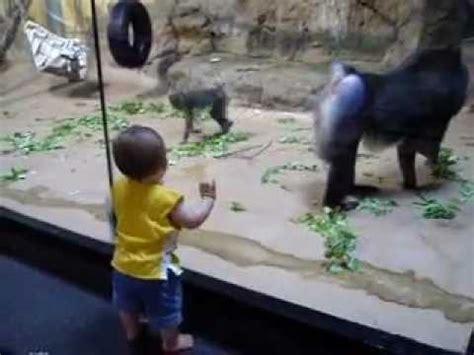 baboon (mandrill) vs. toddler youtube
