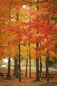 Trees That Shed Their Leaves In Winter by Best 25 Ny Parks Ideas On