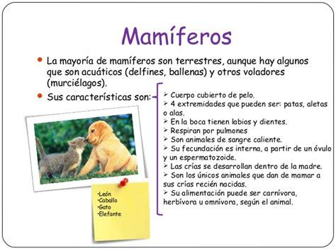 animales vertebrados mamiferos caracteristicas portal 191 qu 233 caracter 237 sticas tienen los animales mam 237 feros