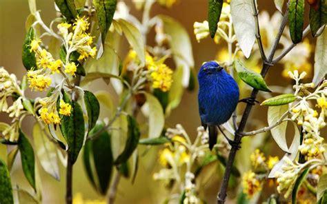 hd spring bird wallpaper