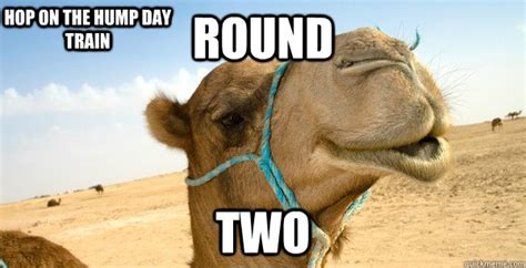 camel hump day memes funny