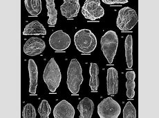 (PDF) Foraminiferal assemblages from the Bajocian Global ... Foraminiferal
