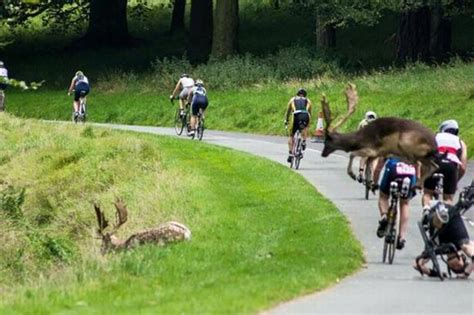 home triathlon ireland pictured stag crashes into cyclist during dublin city