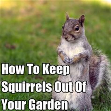 how to keep squirrels out of your garden squirrel