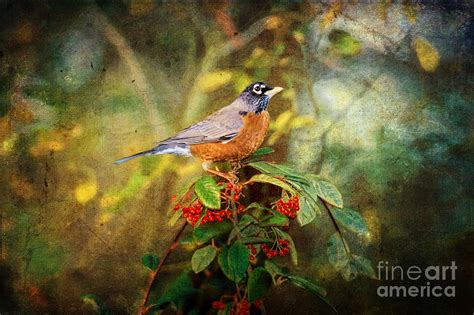 american robin harbinger of spring digital art by lianne