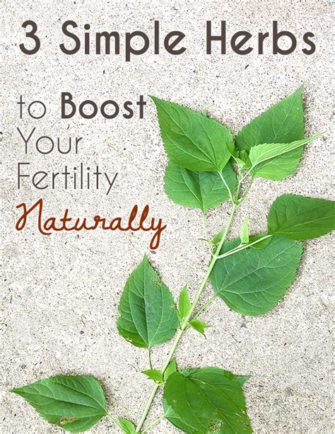 3 herbs to boost your fertility naturally