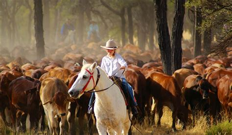 australian cattle cowboys city slickers outback muster to end them all australian