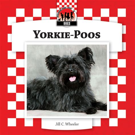 teacup yorkie puppies price range yorkie price range