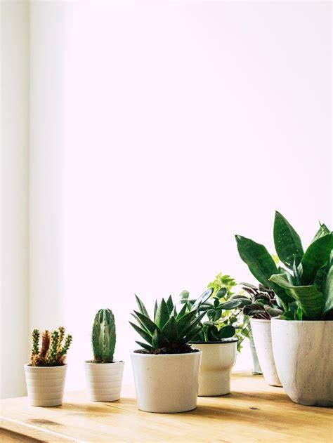 macam macam tanaman hias  cepat tumbuh mudah