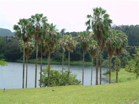 Kaneohe Botanical Gardens Hoomaluhia Botanical Gardens Kaneohe Hi Hours Address Attraction Reviews Tripadvisor