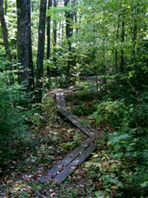 hiking trails on the brule river near brule wisconsin