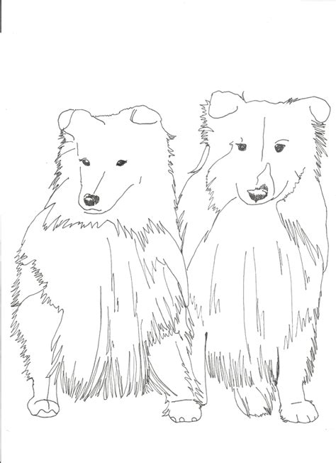 sheep dog coloring page shetland sheepdogs