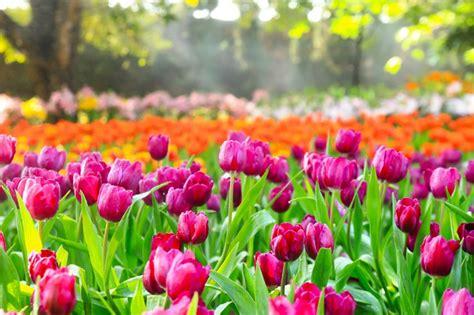 imagenes de flores interactivas vocabulario sobre la primavera en ingl 233 s spanishdict