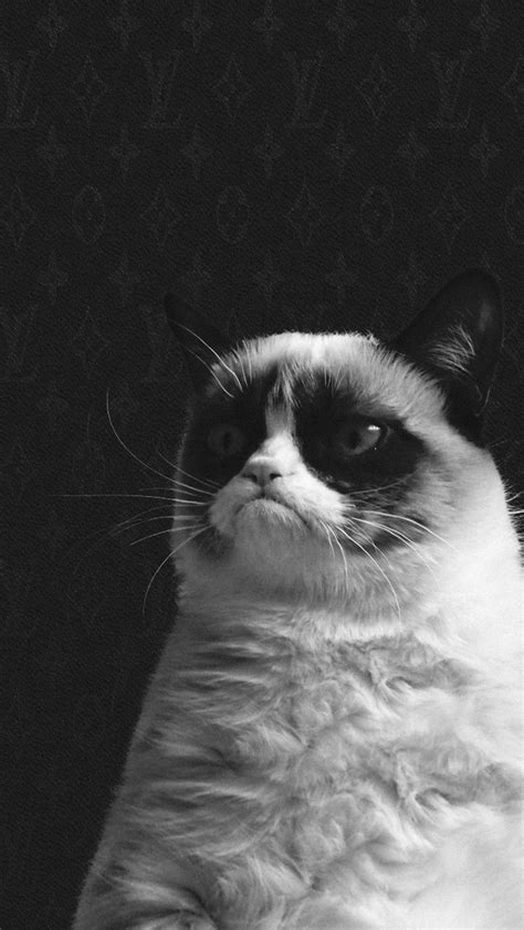 grumpy cat wallpaper iphone 60 cool iphone 6s funny wallpapers and backgrounds in hd