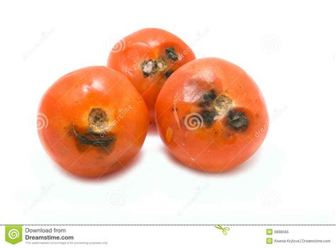 Or Rotten Tomatoes Rotten Tomatoes Royalty Free Stock Photo Image 6898565