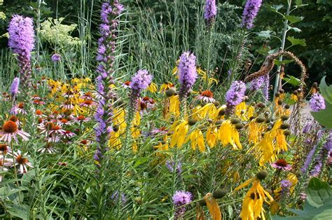 flowering prairie plants books illinois conservation land trusts by region prairie