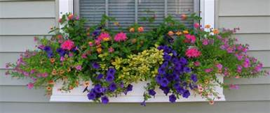 window boxes for plants shapes and forms of flowers for window boxes