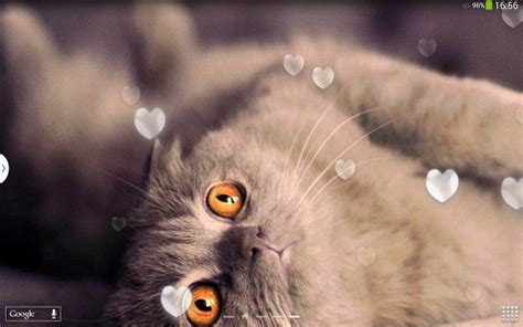 cat live wallpaper apk app cats live wallpaper apk for windows phone