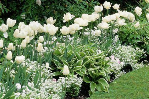 white garden ideas a white border idea for your garden