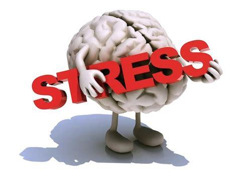 Brain Stress - how taurine deficiency can cause brain damage