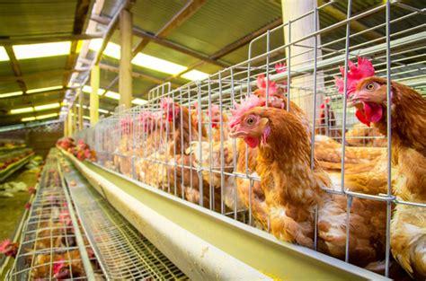 the egg factory order eggs the egg taste test plus 4 reasons to spend money on
