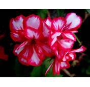 Imagenes De Plantas Sin Flores Car Tuning