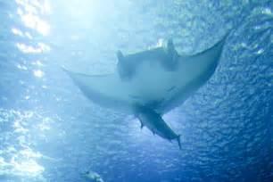 file ocean underwater fish jpg