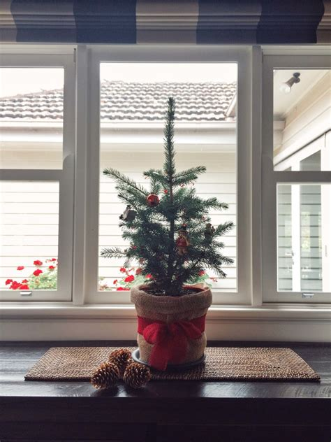 how winter indoor plants bring joy and promote wellness