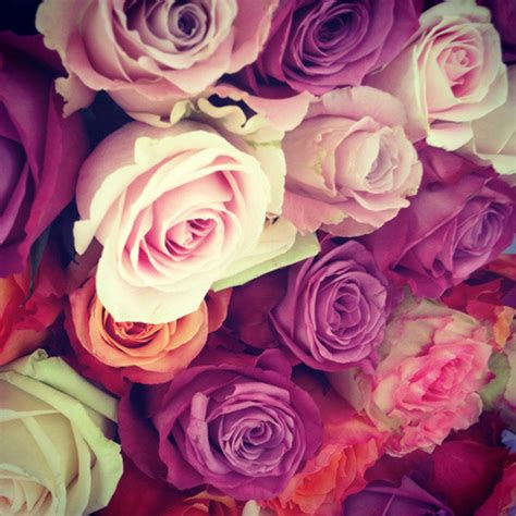 themes of rose flower vintage roses on tumblr